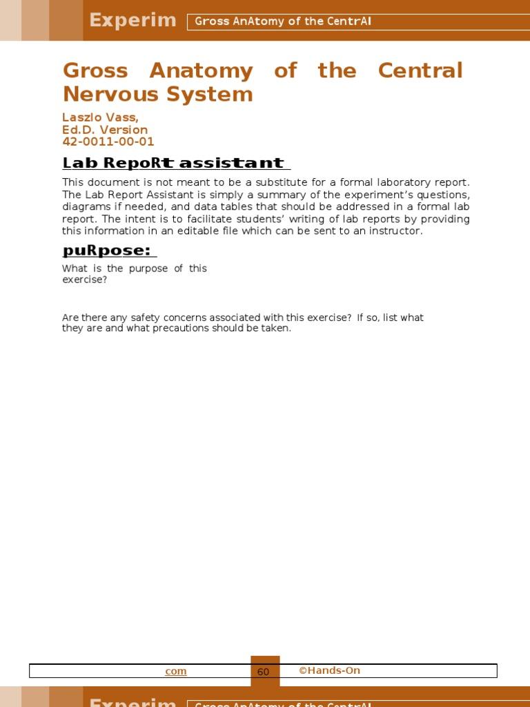 Lab 11- Gross Anatomy of the Central Nervous System   Brainstem ...