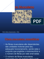 Tipos de fibras musculares esqueléticas
