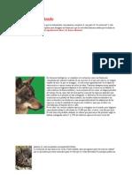 animales en extinción1