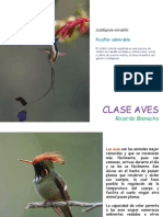 Clase Aves I