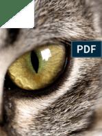Pet Eye Problems