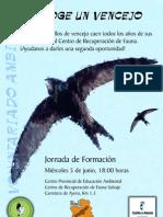 Acoge VENCEJOSun vencejo.PDF