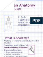 Anatomy Lecture1