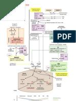 Metabolismo lipoproteico