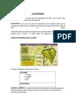 nuevodocumentaldelashojas-100106143624-phpapp01