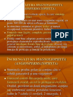 4_Lauraceae_Araliaceae