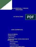 2da Clase Cabeza - Cara Superficial - Dr Correa