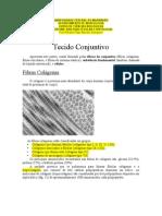 Tecido Conjuntivo-Estudo Dirigido