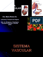 Estructura y Funcion-sistema Vascular1