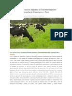 Resistencia de Fasciola hepatica al Triclabendazol en Bovinos de la Campiña de Cajamarca