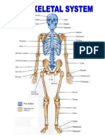 The Skeletal System.docx