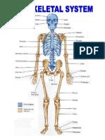 The Skeletal System.docx