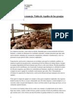 El personal y su manejo. Talón de Aquiles de las granjas porcinas Word