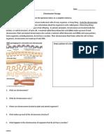 HW page on chromosomes