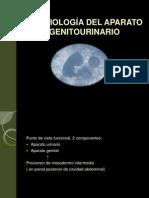 Embriologia Del Aparato Genitourinario