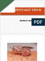 Lalat Tsetse