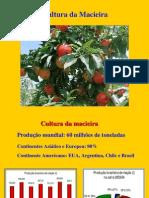 macieira.pdf