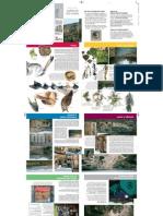 Rio Lobos PDF 221010134043