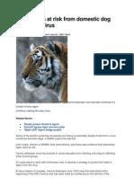 Dog Disease in Tigers