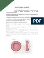 Aparato Cardio Vasculr. Manual de Enfermeria