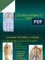 13- Columna Vertebral