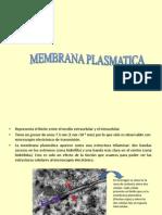 Membrana Plasmatica 2013-Final