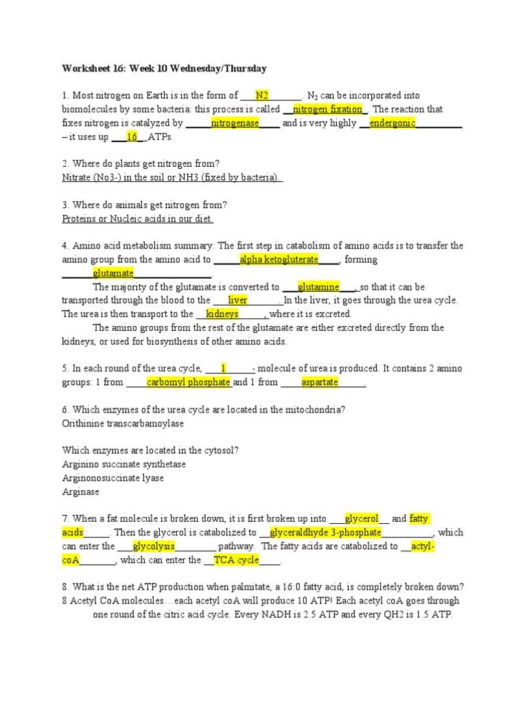 Worksheet 16 Adenosine Triphosphate Metabolism