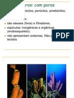 zoologia-revisaoJUNHO