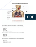 Prueba Sistema Respiratorio (1)