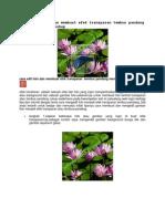 Cara Edit Foto Dan Membuat Efek Transparan Tembus Pandang Menggunakan Photoshop