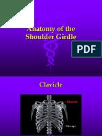 Upper Anatomy