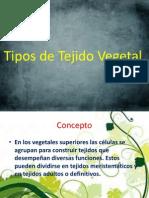 Tipos de Tejido Vegetal