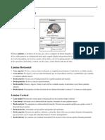 Hueso palatino.pdf