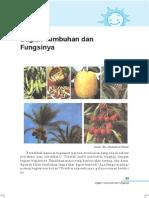 3. Bagian Tumbuhan Dan Fungsinya