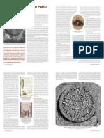 Articulo La Piedra Del Sol, En Paris..pdf