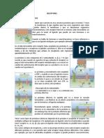 receptores-130419150441-phpapp01