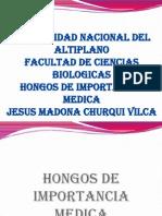 HONGOS madona