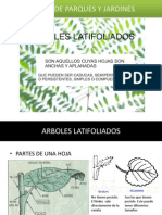 ARBOLES LATIFOLIADOS 1