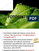 fotosintesis7