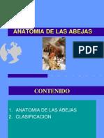 Clase2 Anatomia