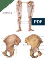 pelvis extremidades inferiores1.pptx