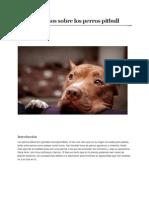 Datos Curiosos Sobre Los Perros Pitbull