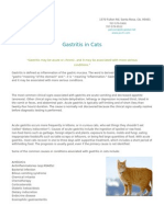 Gastritis in Cats