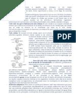 Glosario de Terminos (LISTO)FINAL