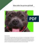 Lo que no sabías sobre los perros pit bull