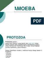 Amoeba 1