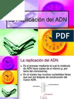 Duplicacion Transcripcion y Traduccion