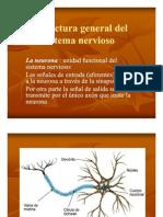 30316225-Estructura-General-Del-Sistema-Nervioso.pdf