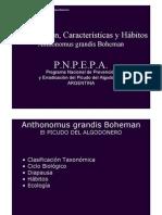 Anthonomus Grandis