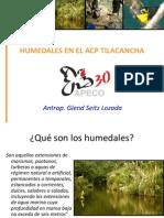 HUMEDALES EN EL ACP TILACANCHA. Glend Seitz ( APECO)